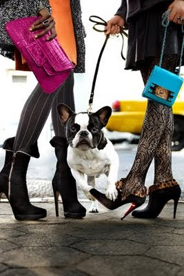 200911-omag-boot-trendsdogs5