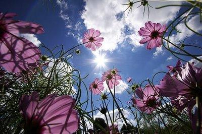 fffound+flowers